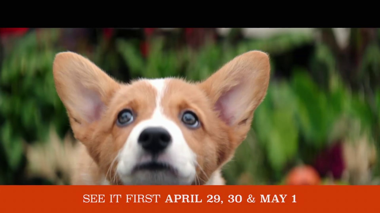 """A DOG'S PURPOSE – OFFICIAL """"EVERY LIFE"""" TV SPOT [HD]"""