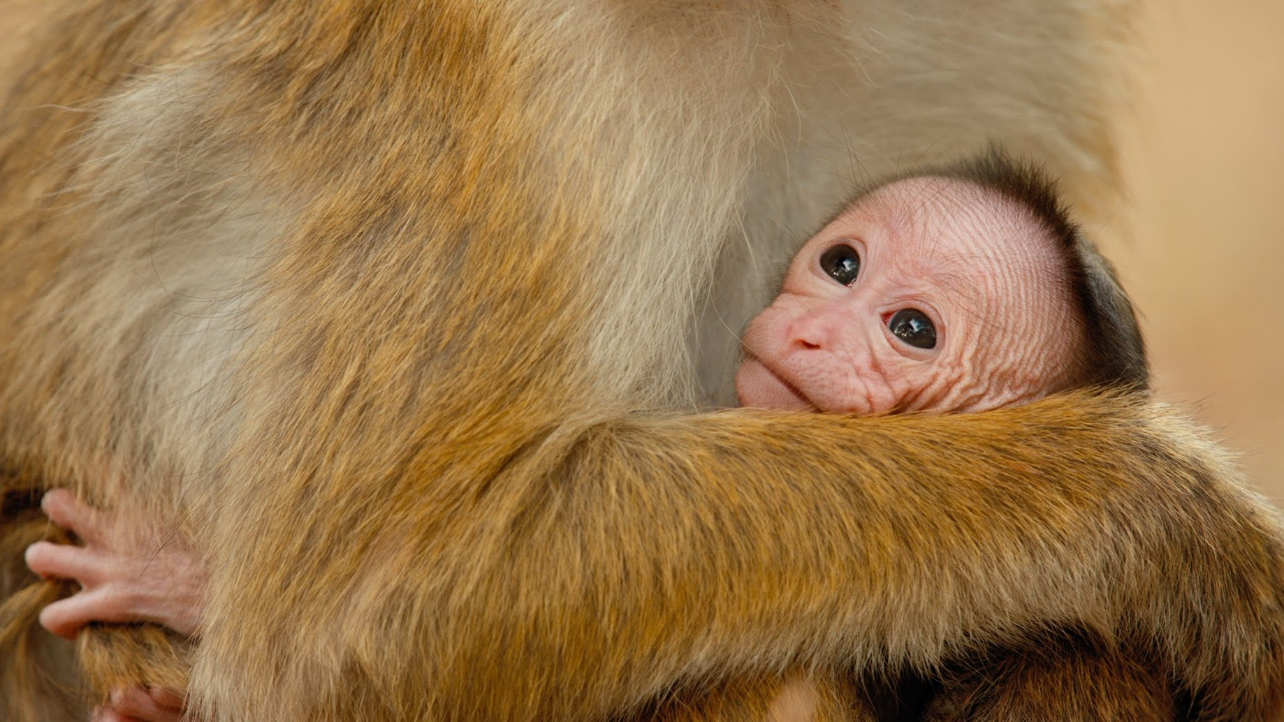 A Thank You from Disneynature