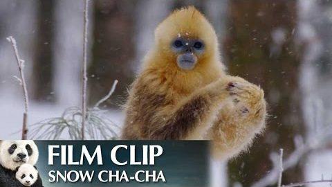 """""""Snow Cha-Cha"""" Clip – Disneynature's Born in China"""