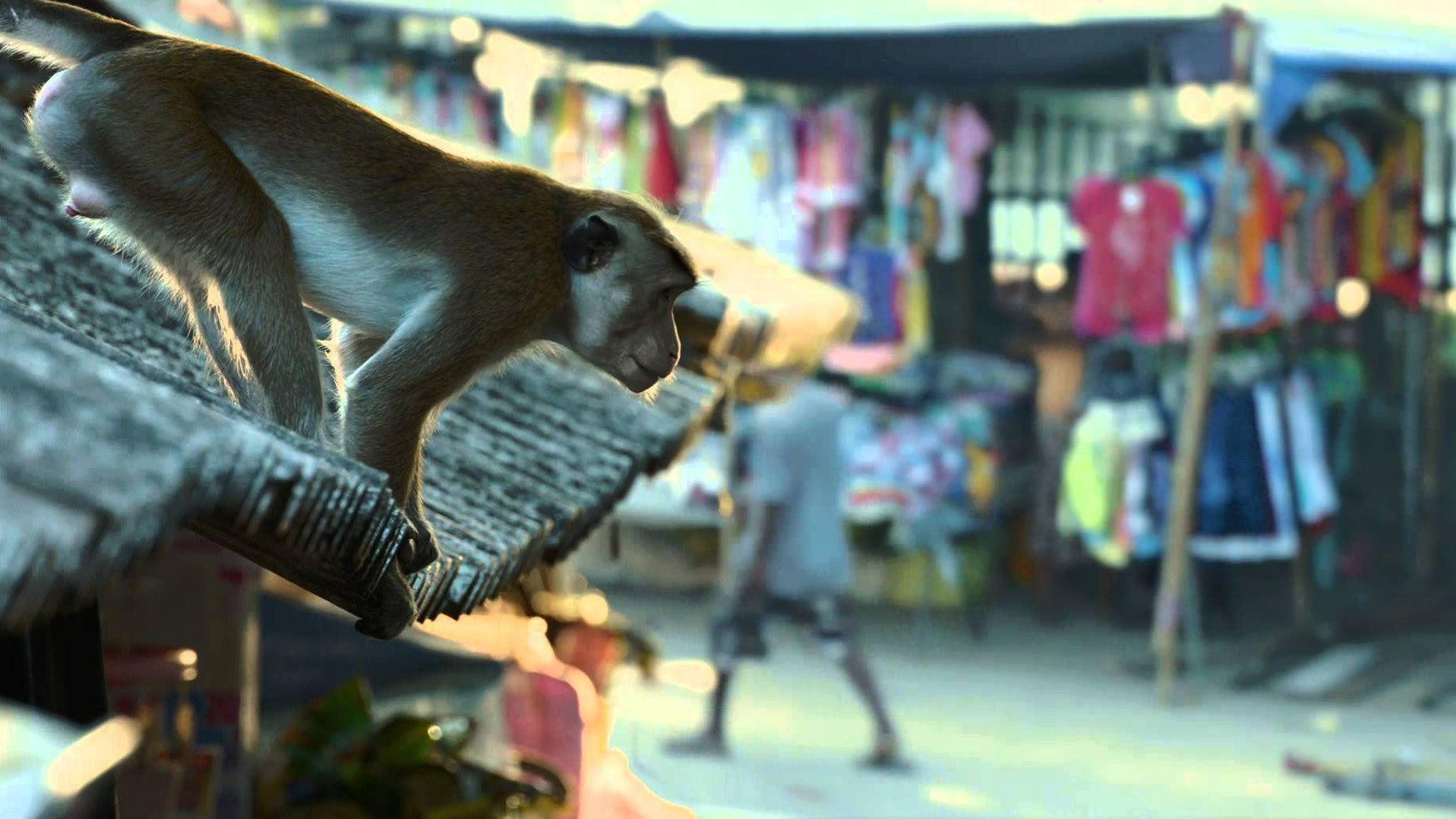 """Urban Jungle"" Clip – Disneynature's Monkey Kingdom"
