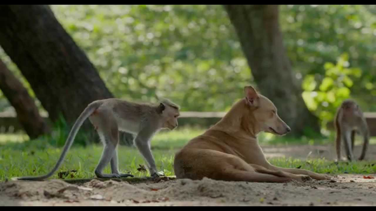 """""""What Are You"""" Clip – Disneynature's Monkey Kingdom"""